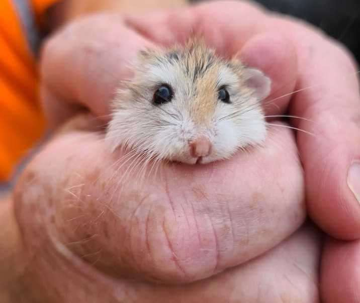 The hamster was found in the back of a bin lorry in Herne Bay. Picture: Canterbury City Council