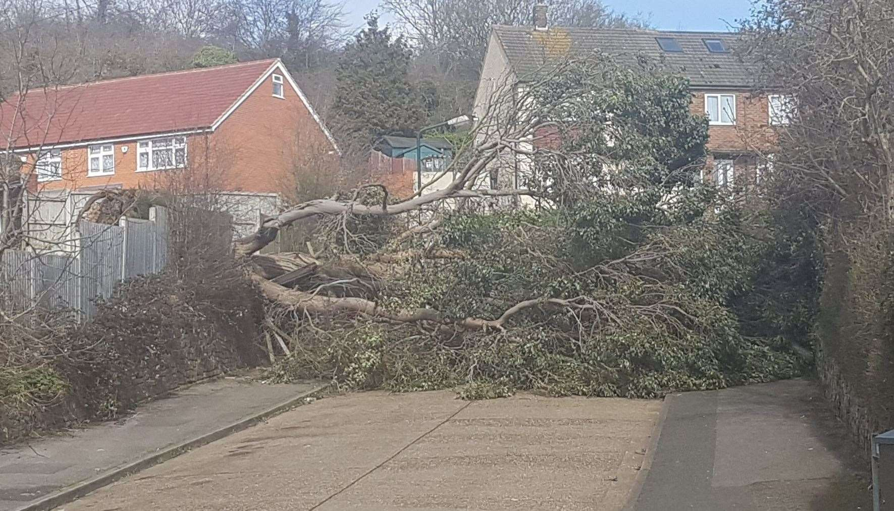 High winds brought down a tree in Carnation Road, Strood. Picture: Dawn Ellis