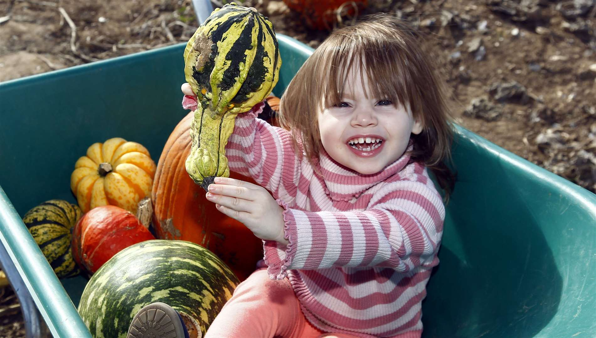 Scarlett Hempson picks a pumpkin at Pumpkin Moon in Sandling last year Picture: Sean Aidan