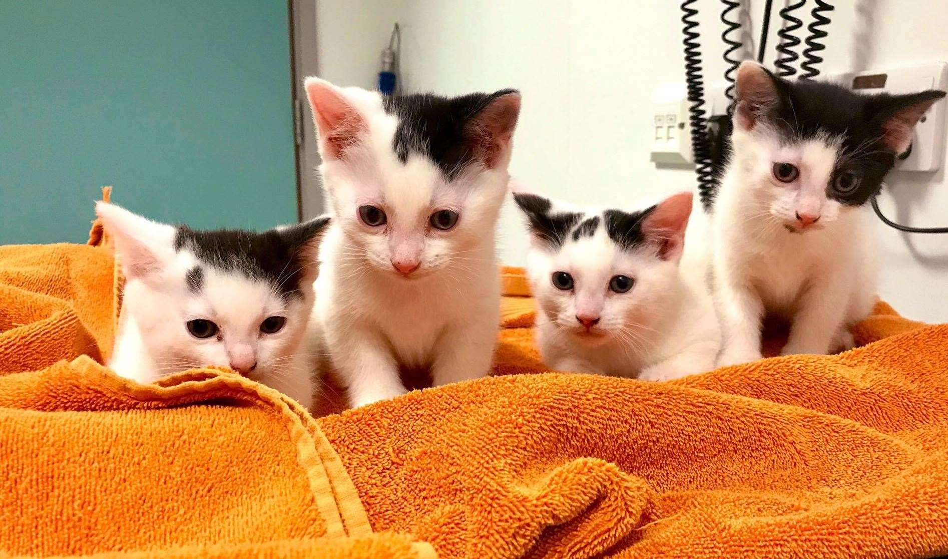 Hundreds Of Cats And Kittens Abandoned In Kent