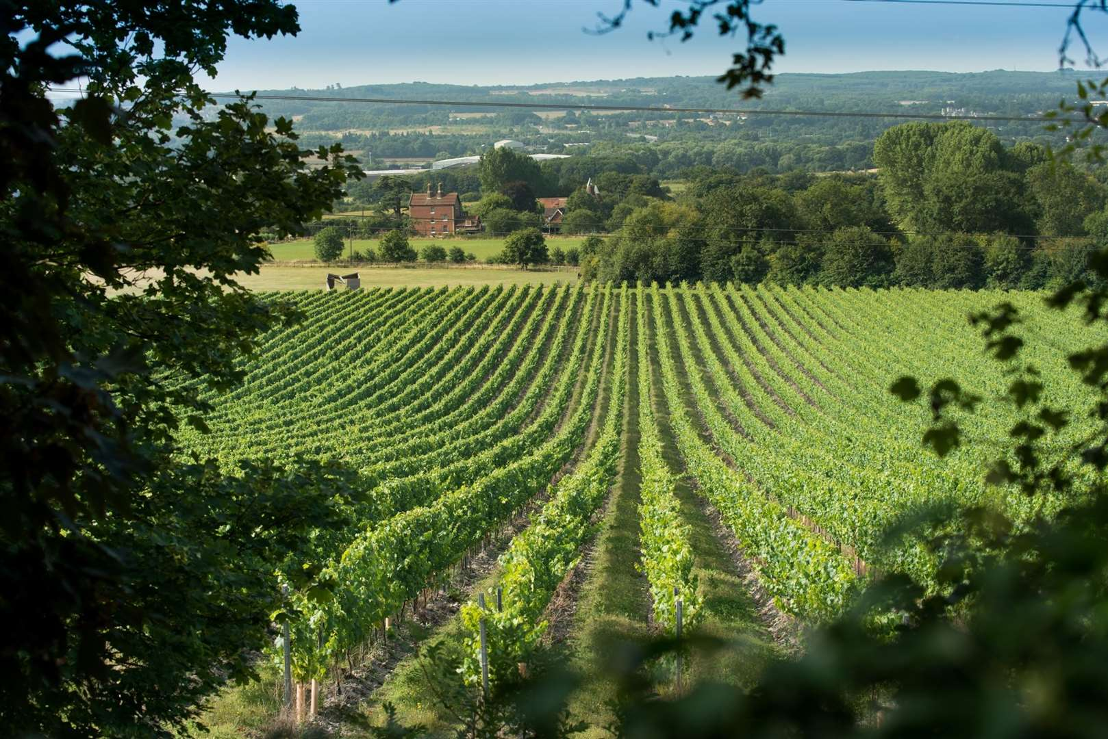 Chapel Down's Kit's Coty vineyard