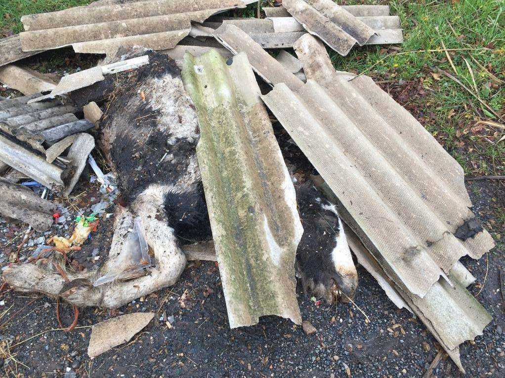 The horse's remains have been left at the side of the road since Wednesday