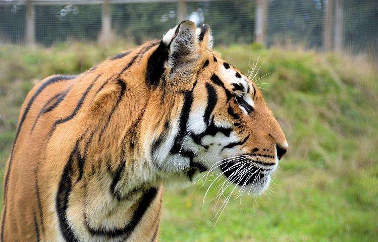 Wingham wildlife park is part of the Big Weekend