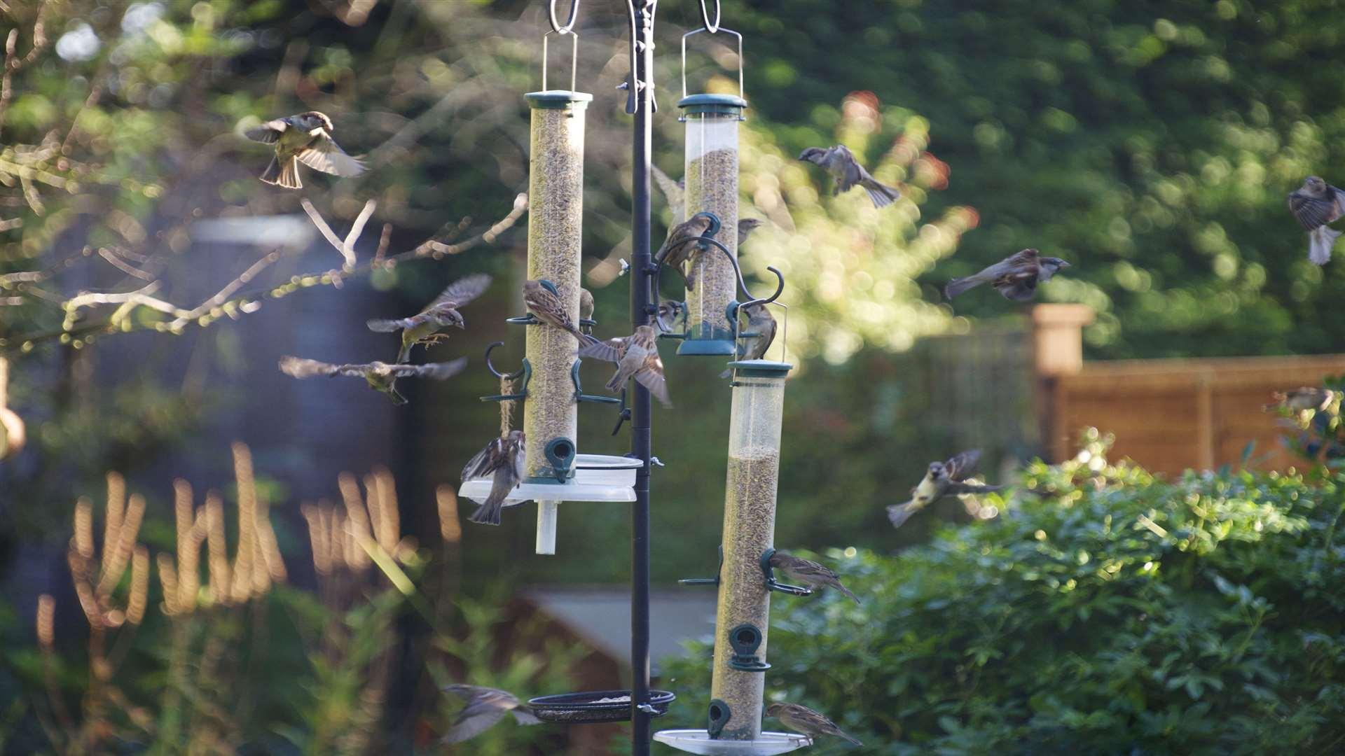 It's time to once again fill up your feeders and register for the Big Garden Birdwatch