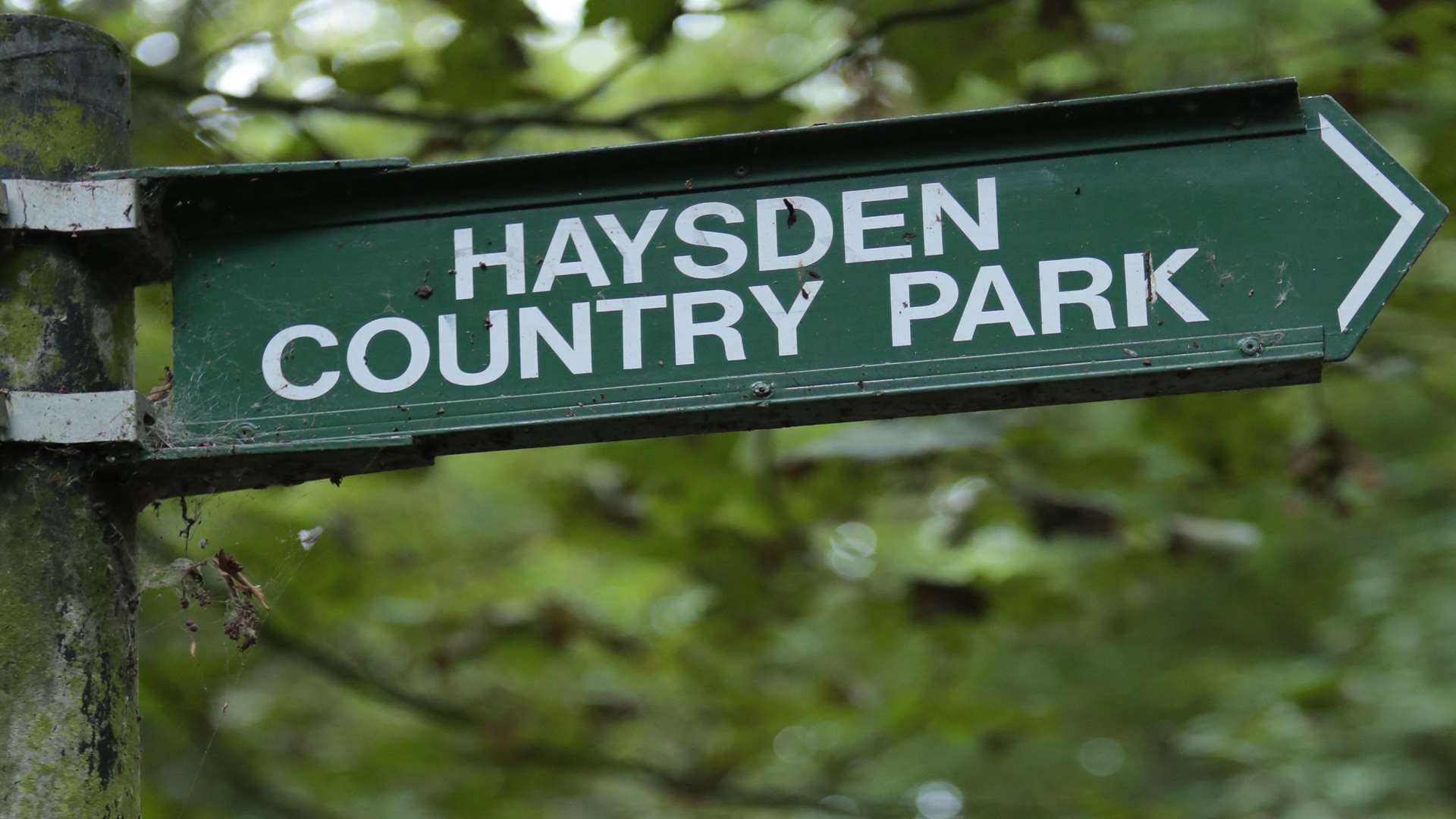 The cats were dumped in Haysden Country Park