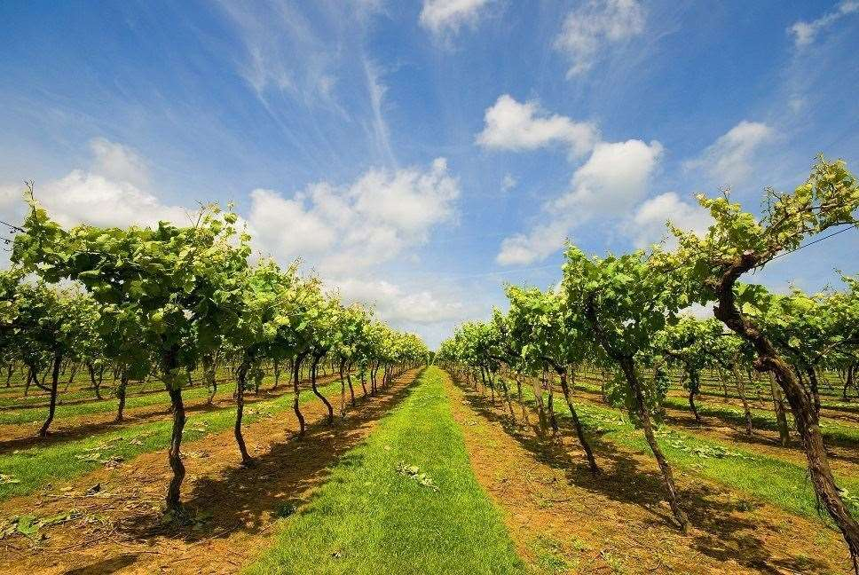 Take a guided tour of Biddenden Vineyards