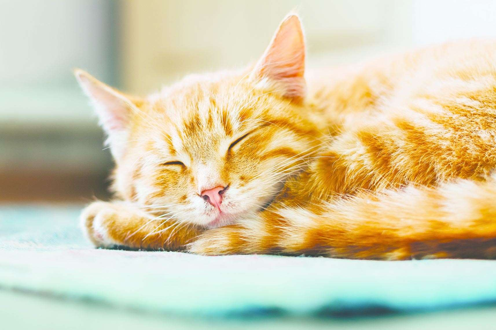 Cats can cost you almost half a year of sleep in their lifetimes