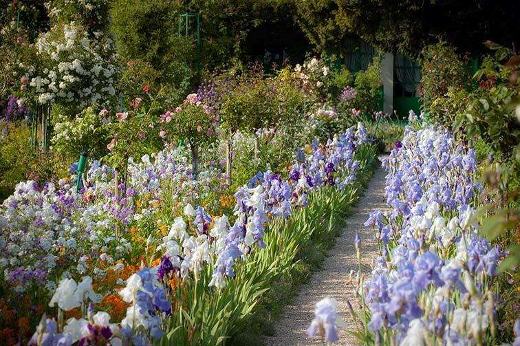 The Cayeux nurseries were originally in the village of Bouttenchocourt, in Picardy, not far from Giverny, pictured