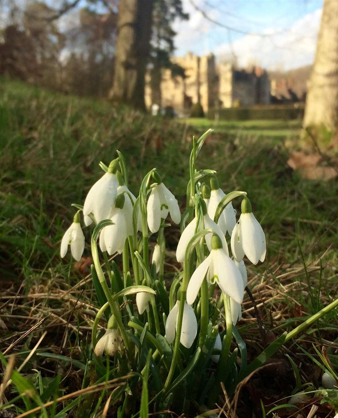 You can see the snowdrops at Hever Castle