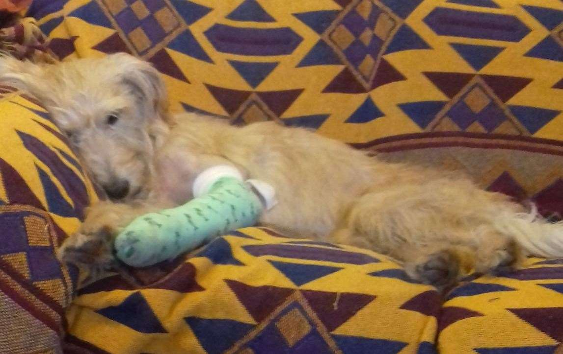 Daisy broke her leg in two places and was dehydrated when she was found. Picture: Madeline Murphy