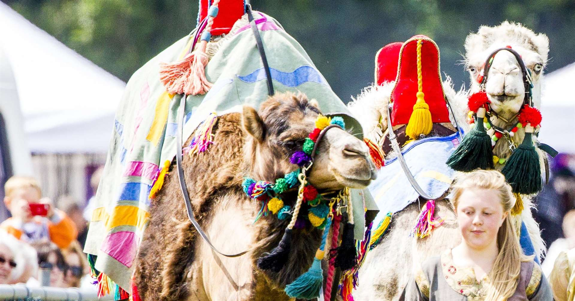 Racing camels are coming to the Kent County Show next summer