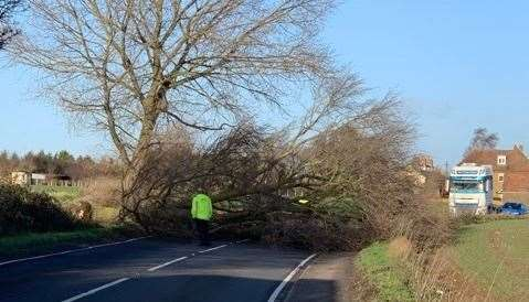 A tree lying across the A251 in Sheldwich. Picture: Jamie Asquith