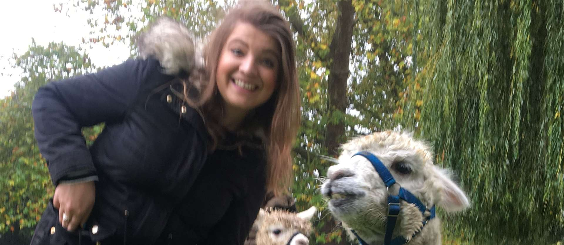 Pepe the alpaca makes a friend at the Kenward Trust in Yalding