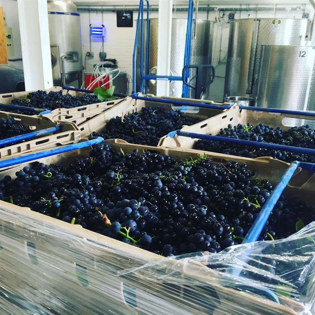 Mereworth Wines is celebrating its first full harvest this year
