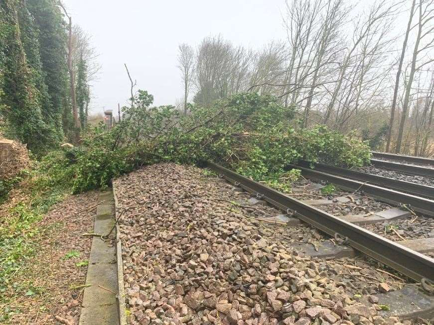 The tree blocking the line towards London at Teynham. Picture: Southeastern(28746295)
