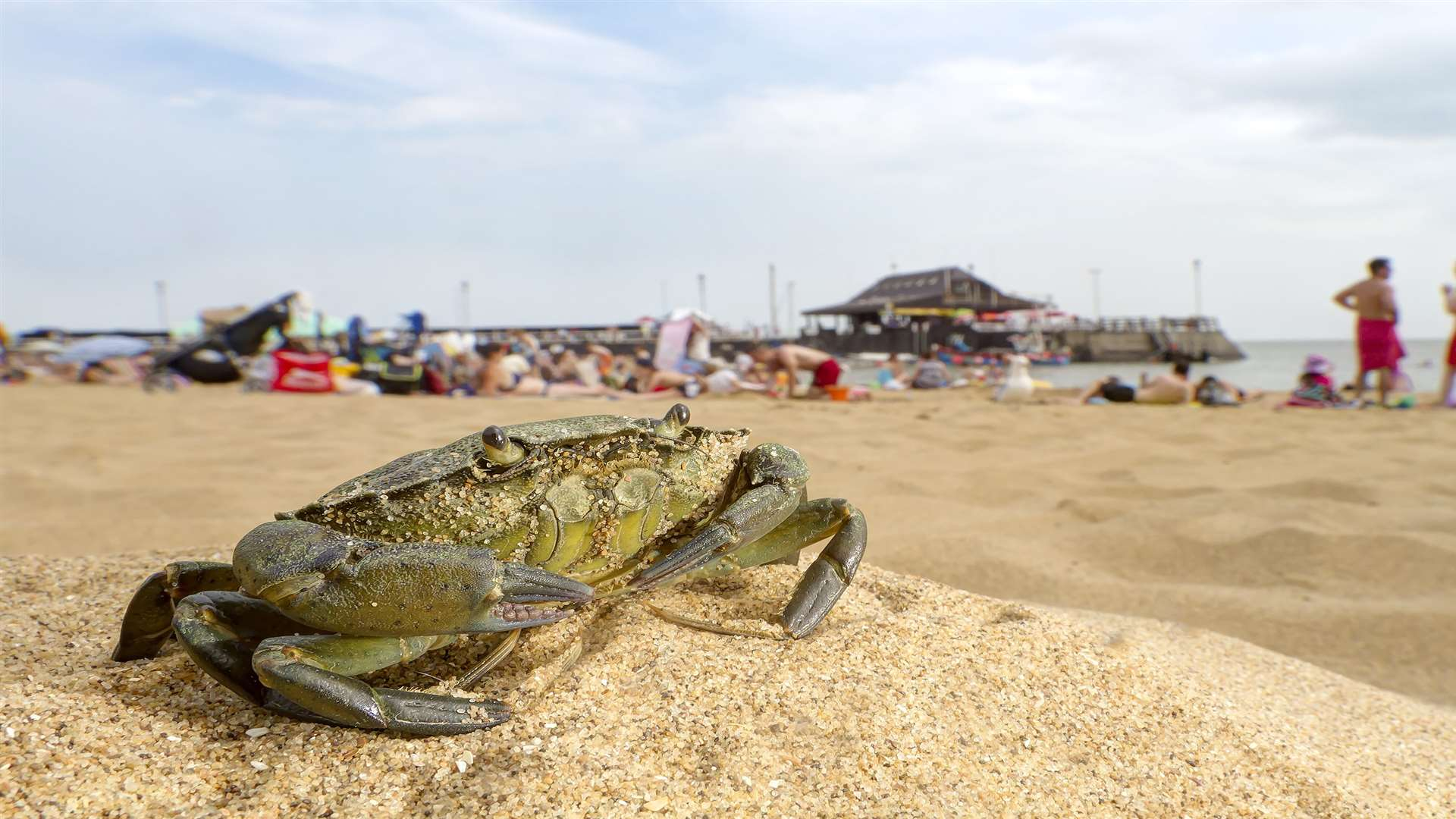 The picture of a a shore crab was one of the four photo's Jason entered in the competition