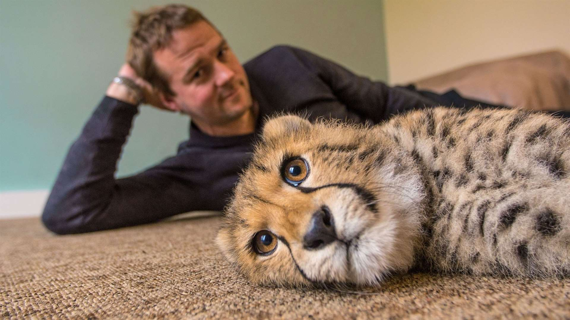 Giles Clark with Willow the cheetah cub on the Big Cats About The House programme. Picture: BBC