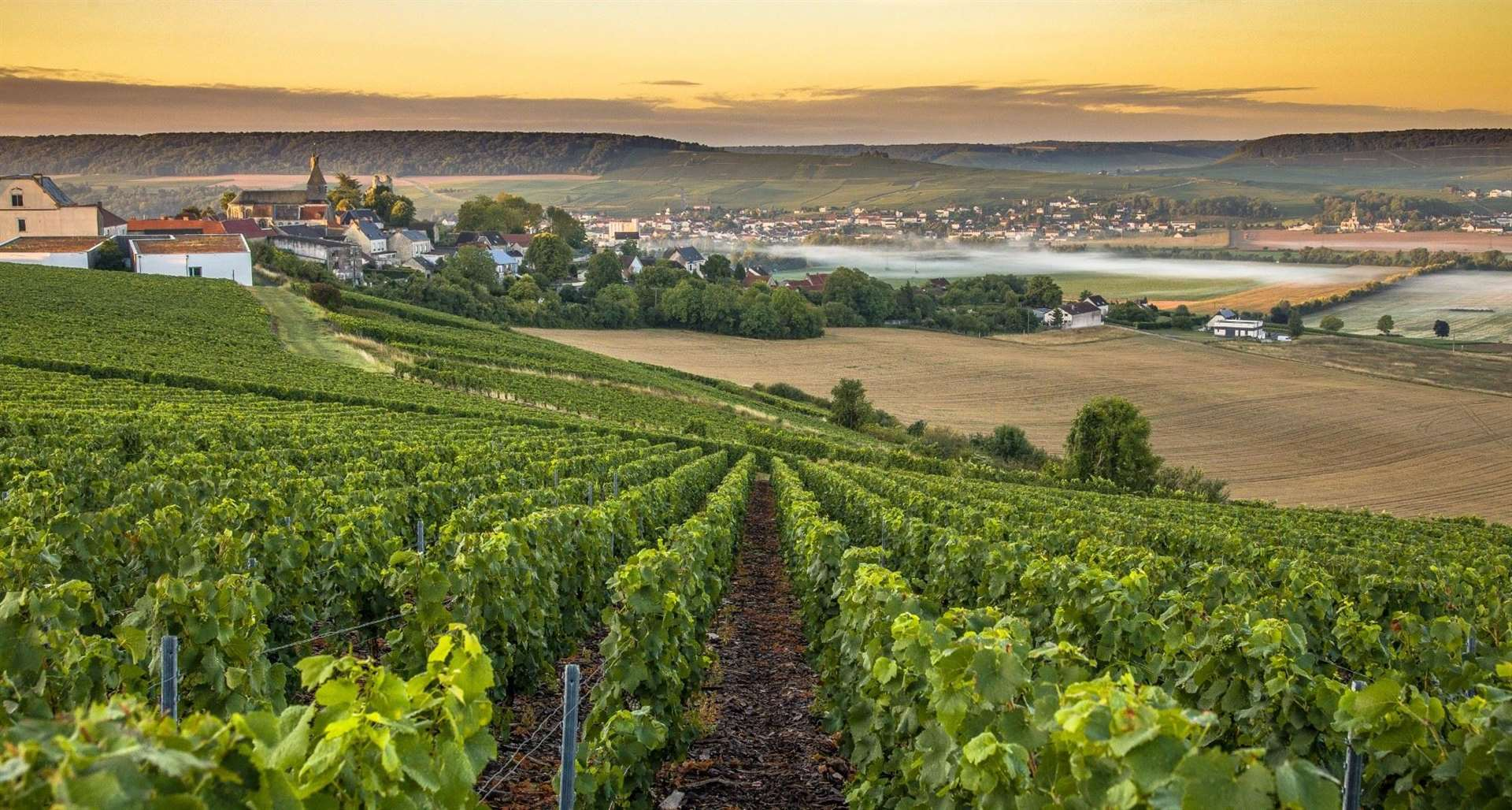 Found just outside of Paris, the popular region of Champagne produces what is widely regarded as the most renowned and recognisable wines in the world.