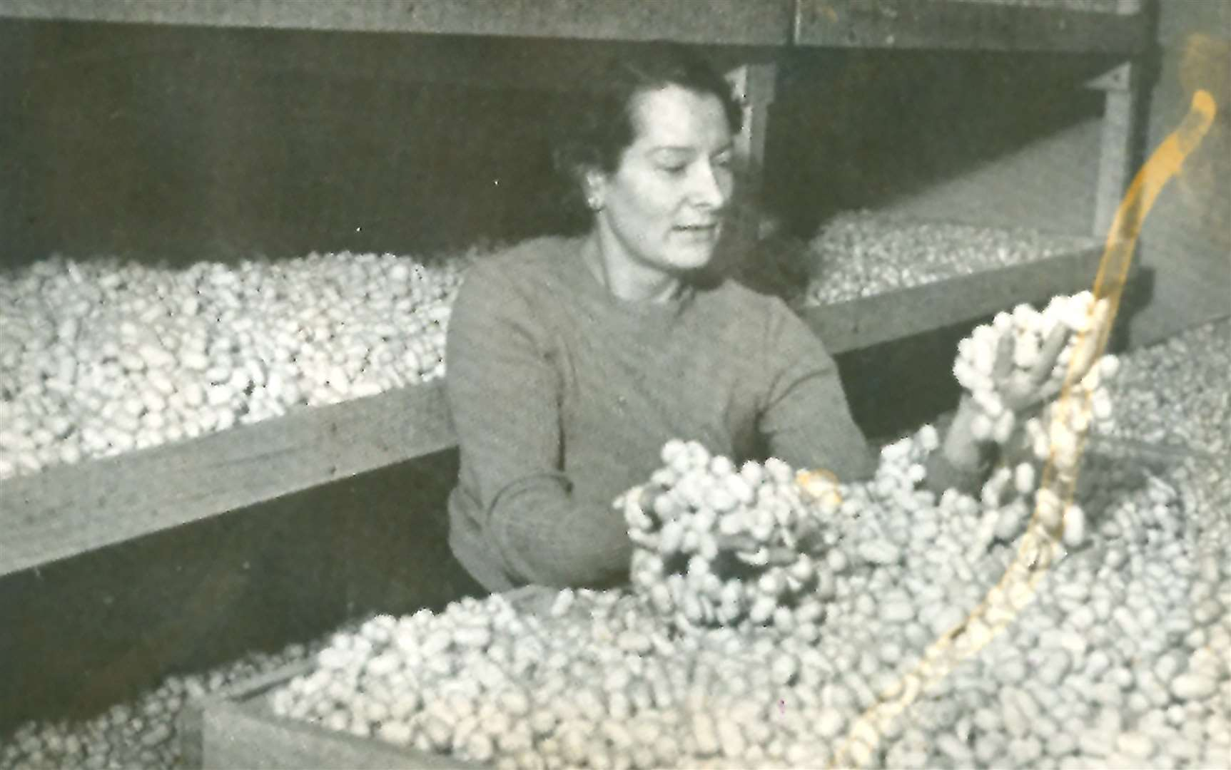 Zoe Hart Dyke with silk cocoons at Lullingstone