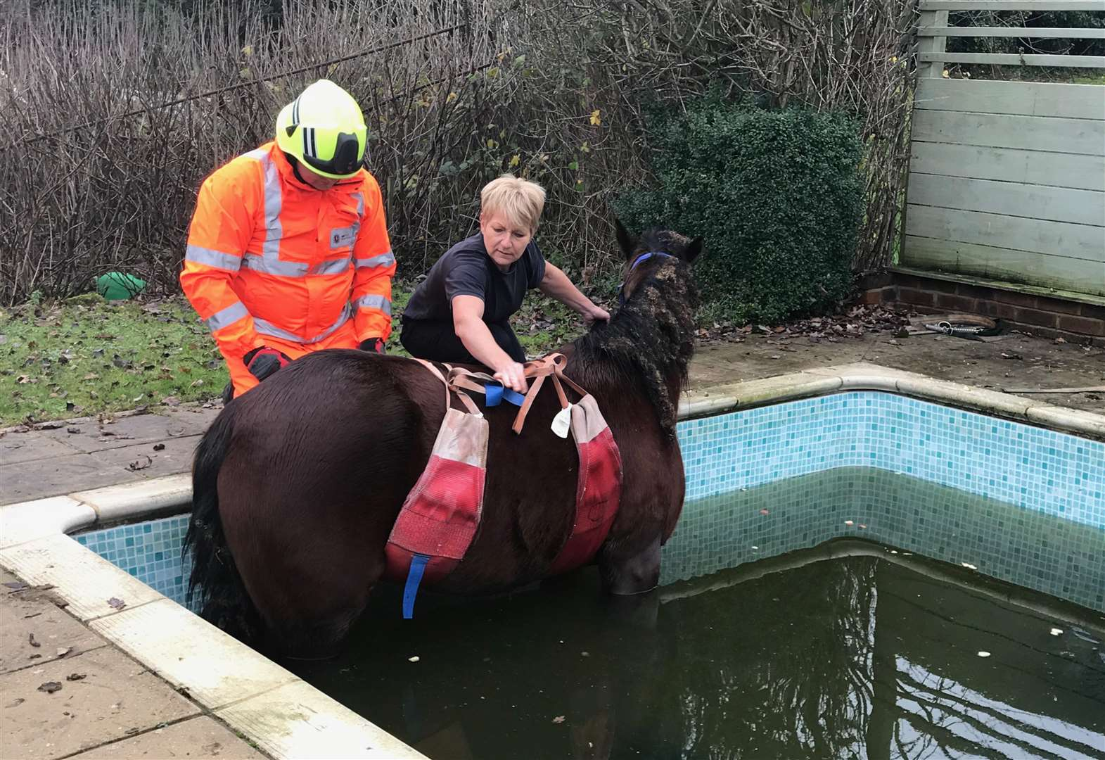 horse rescued from swimming pool in maidstone. Black Bedroom Furniture Sets. Home Design Ideas