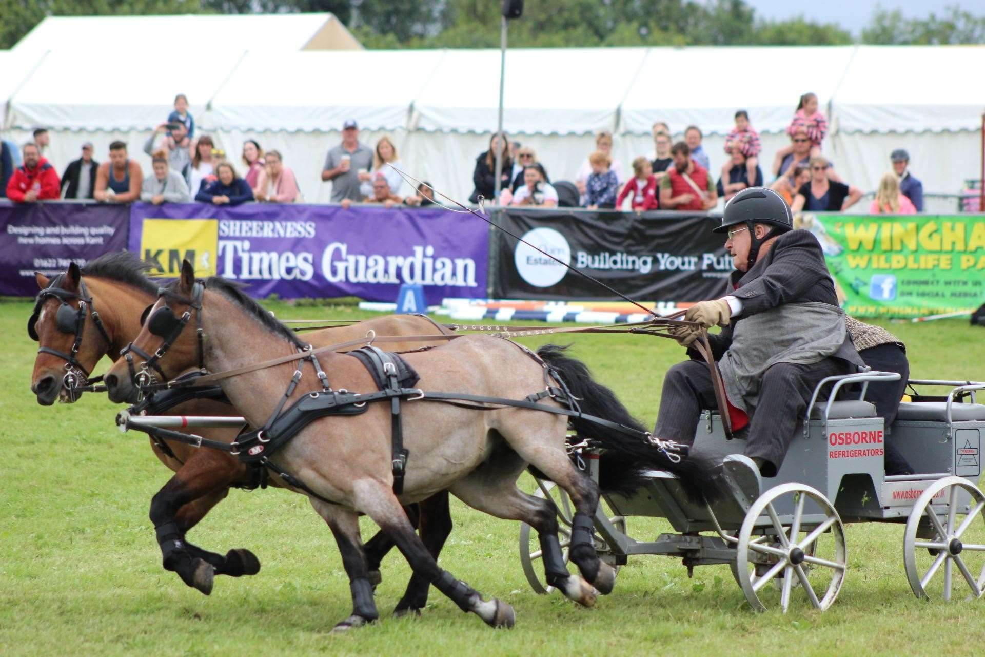 Veteran scurry driver Jeff Osborne, 83, from Bognor Regis and his ponies Twitter and Tweet dash past the Sheerness Times Guardian banner at the Kent County Show (13545728)