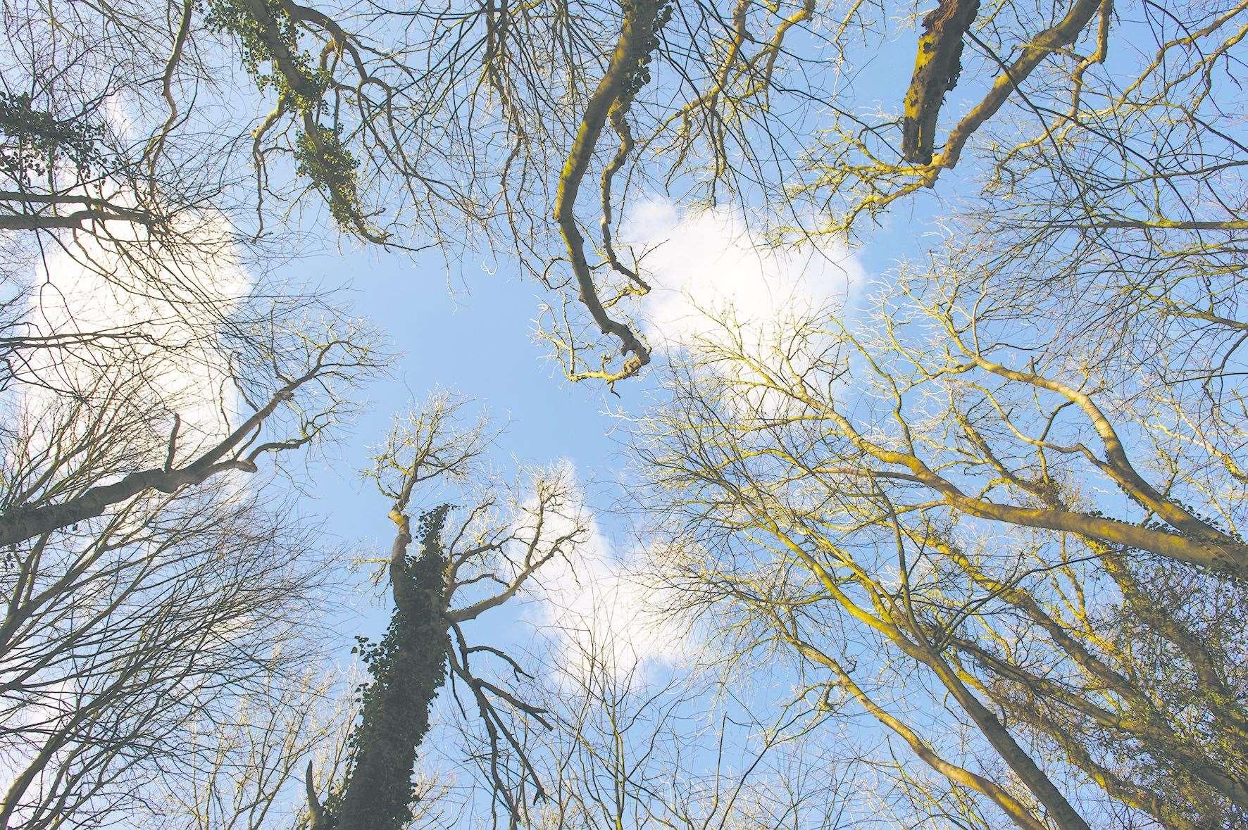 Les arbres boivent jusqu'à 100 litres d'eau de pluie par jour