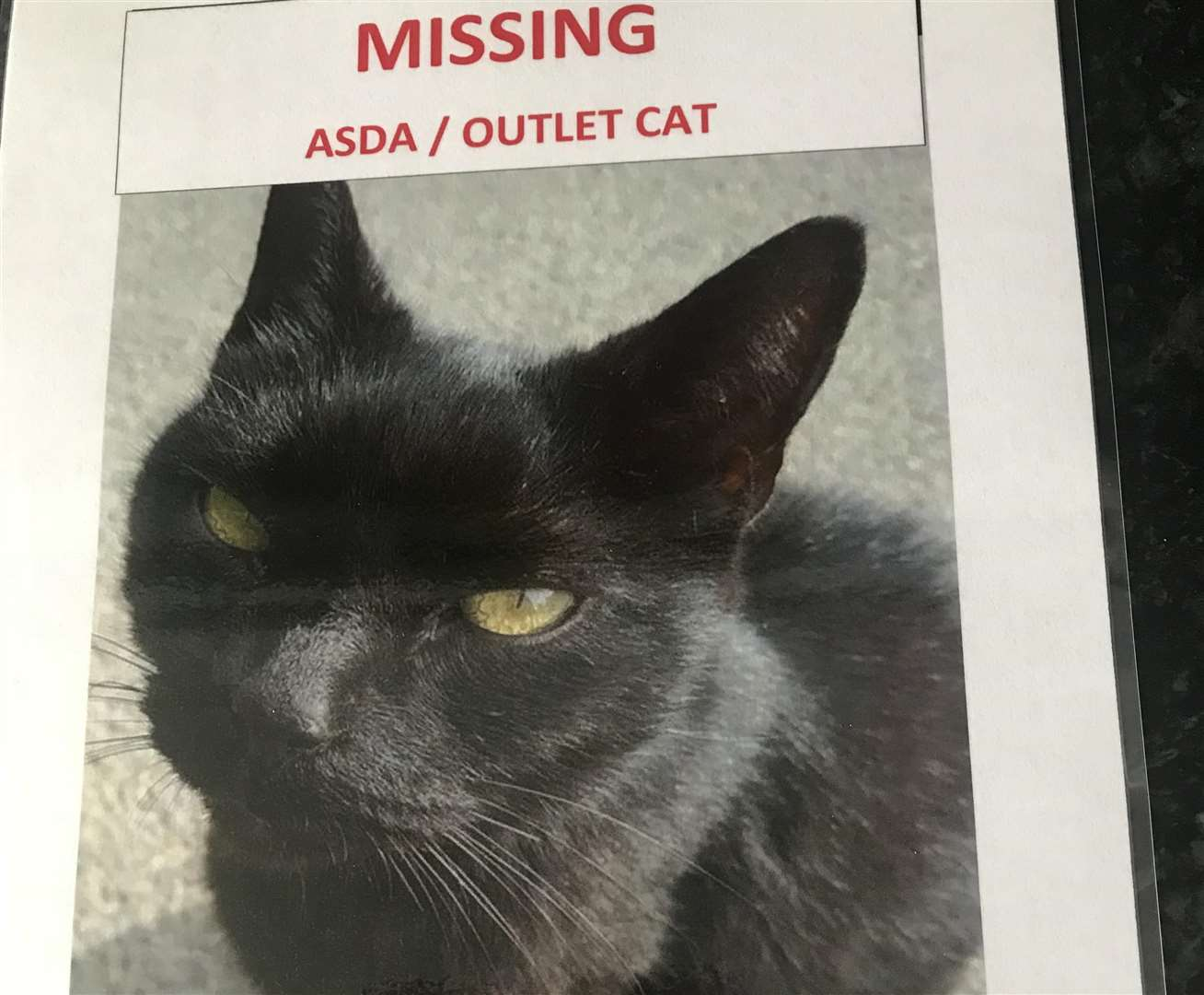 Sammy had been missing for a month before being found