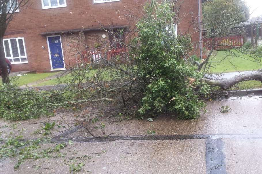 The weather sent trees crashing down in Leander Road, Warren Wood