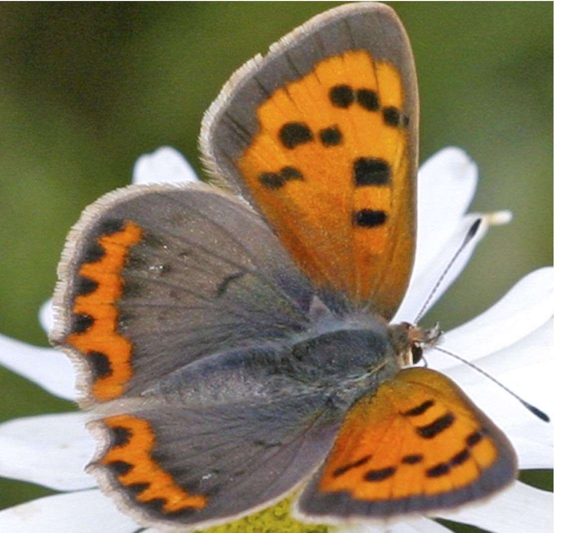 A small copper is the size of a 50p piece