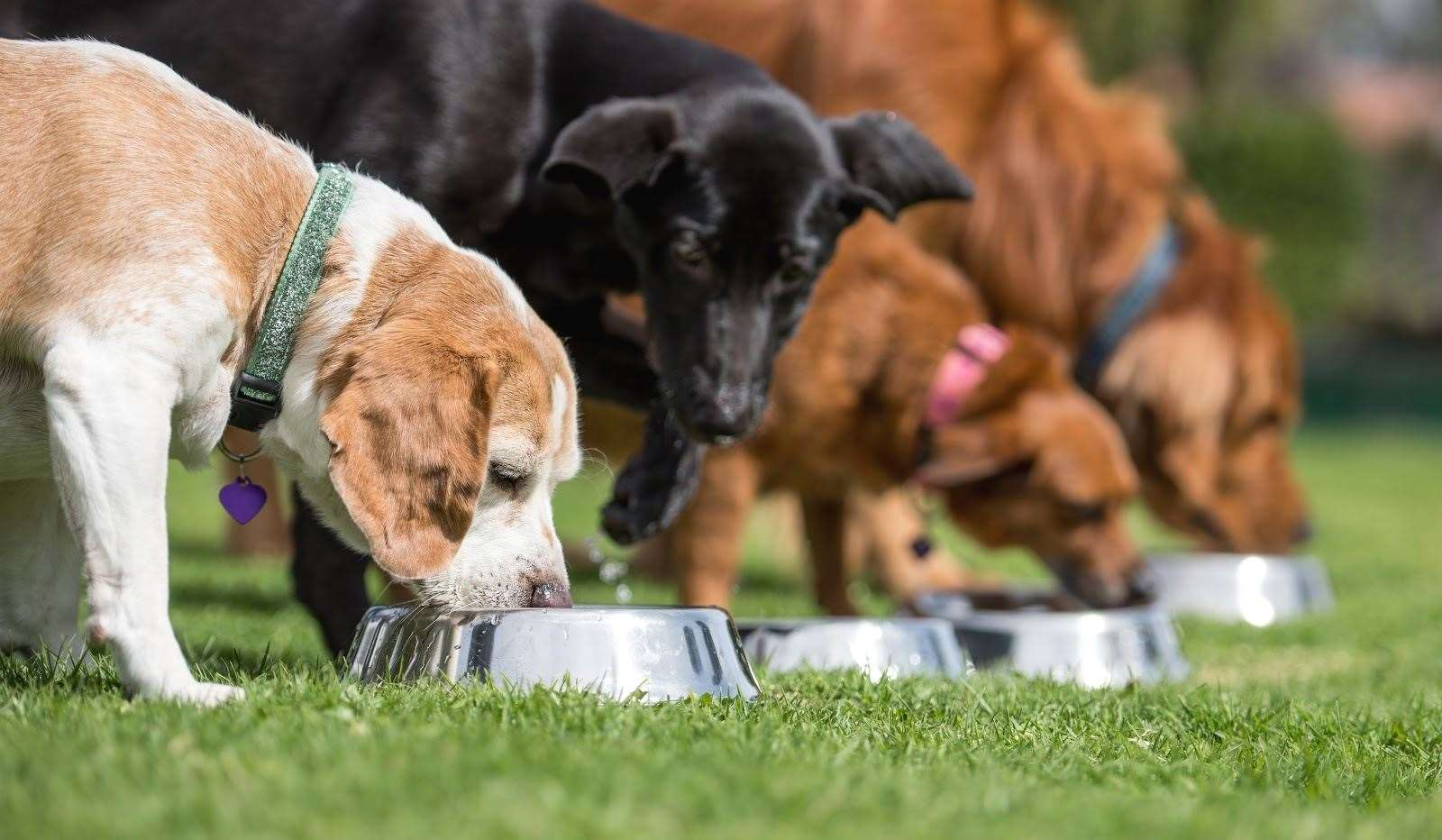 Feeding the right diet for your dog is the first important step to maintaining their weight