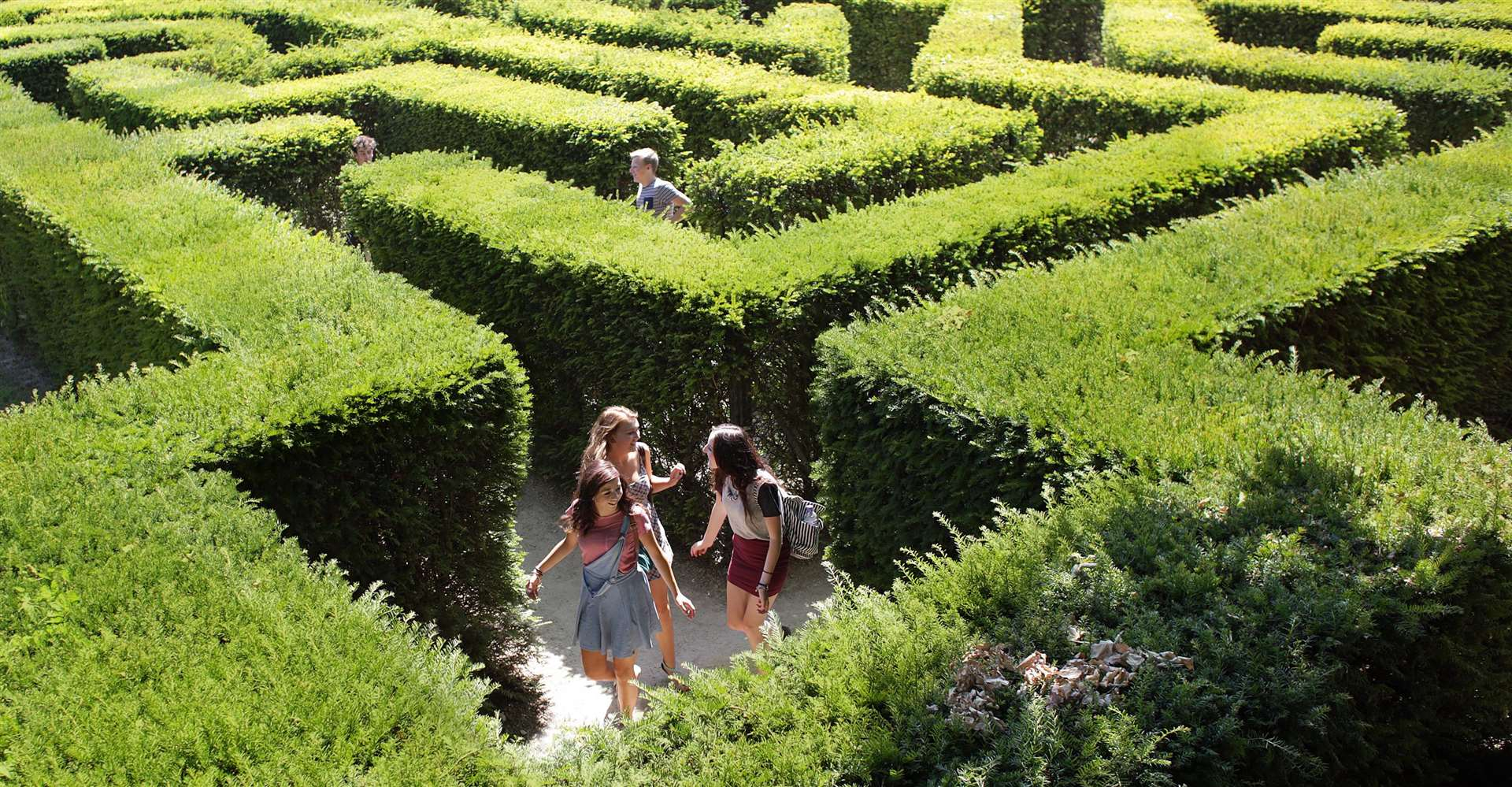 Leeds Castle Summertime: the maze