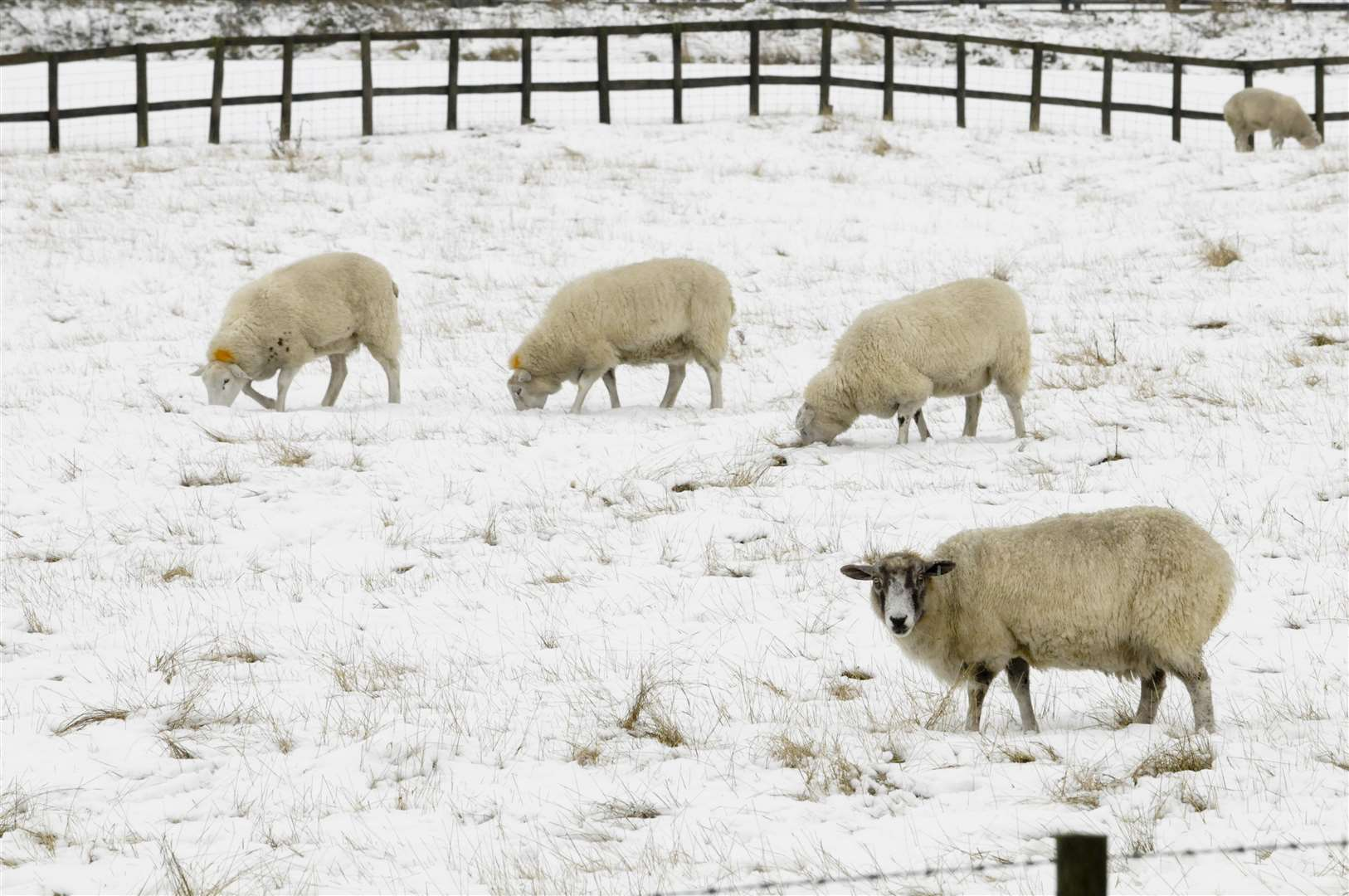 Farmers and rural businesses are being urged to prepare for wintry weeks ahead
