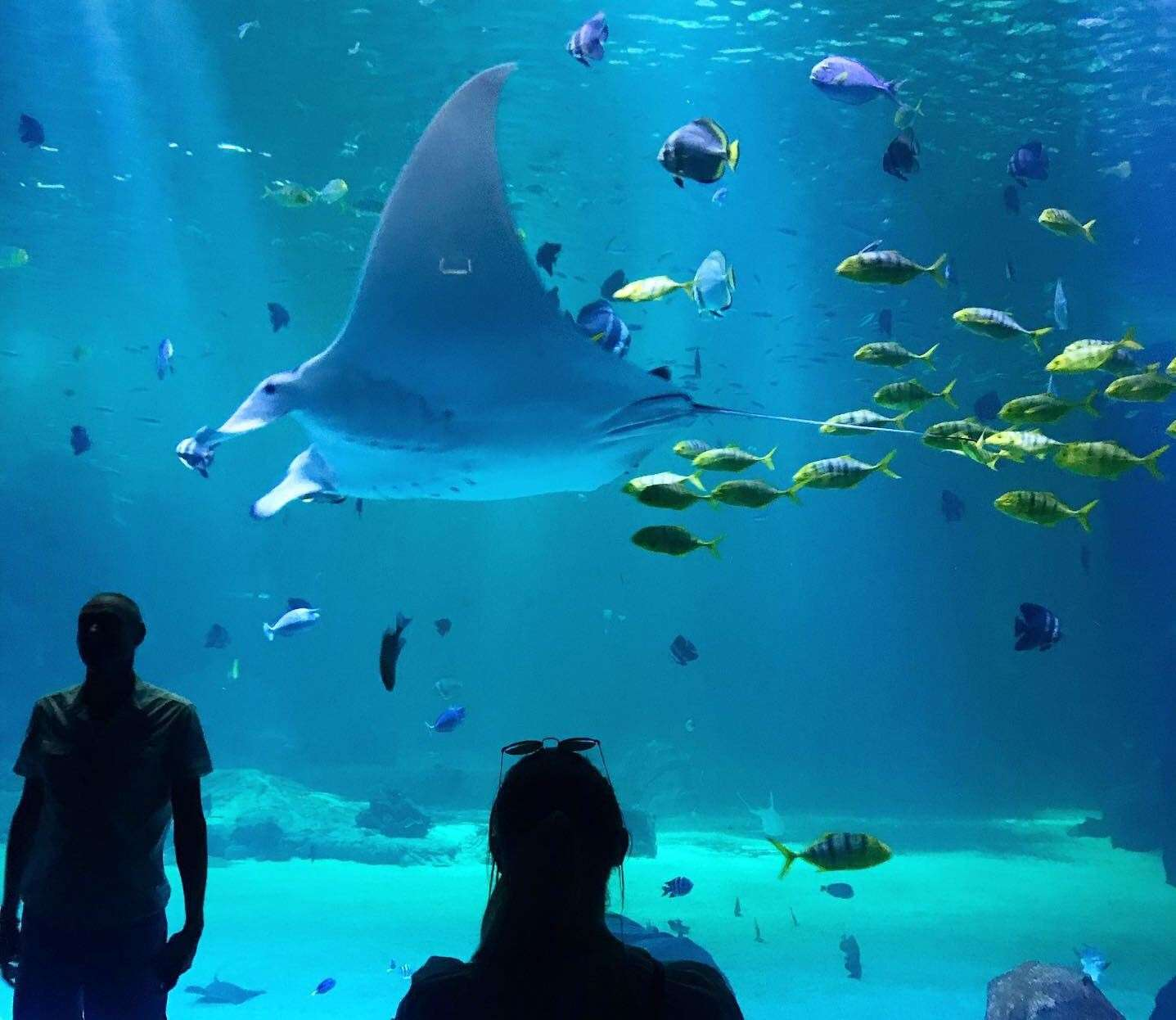 The show stopping manta ray at Nausicaa in Boulogne