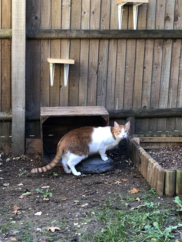 He likes to explore his surroundings (5294725)