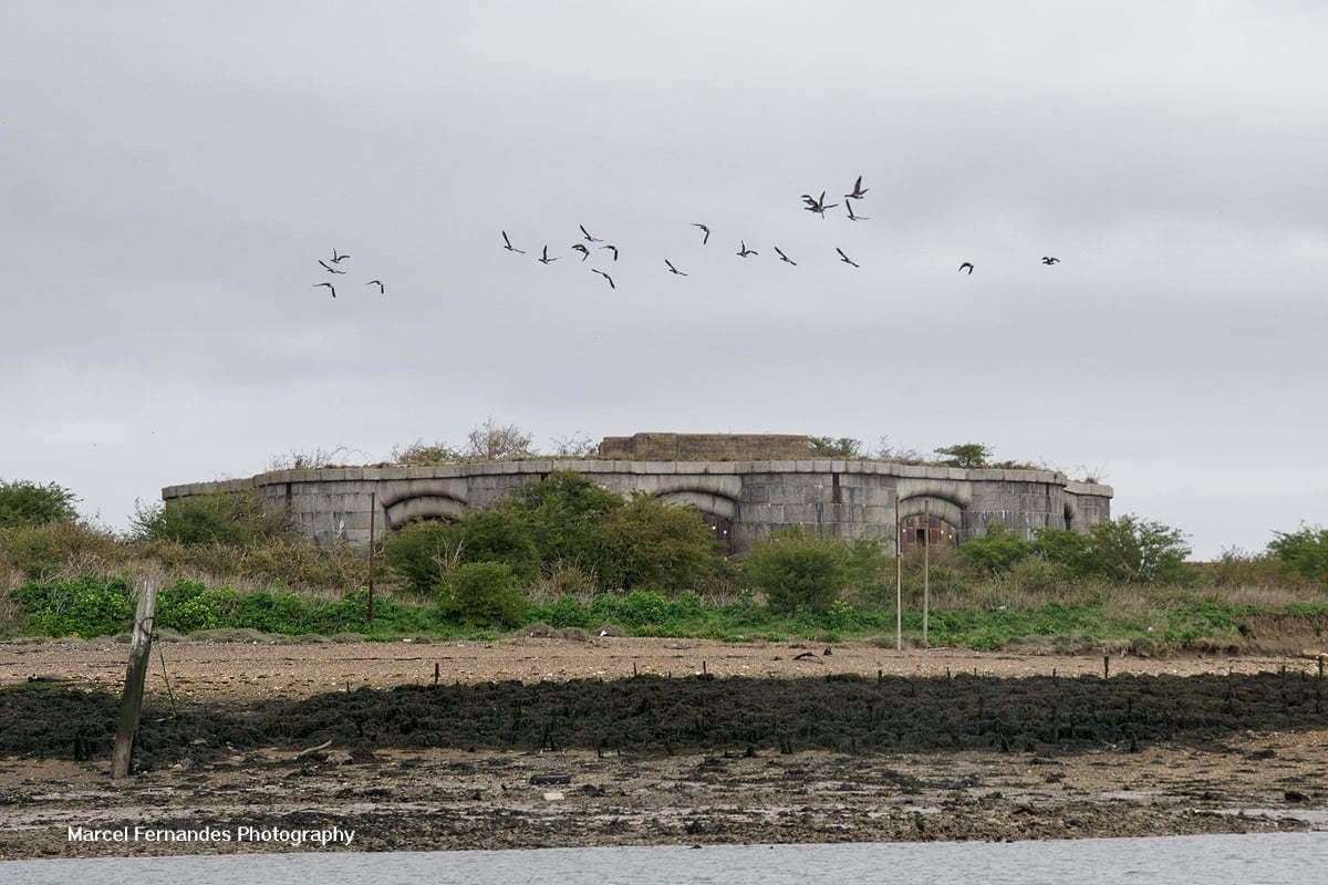 Hoo Fort with birds above it. Picture: Marcel Fernandes