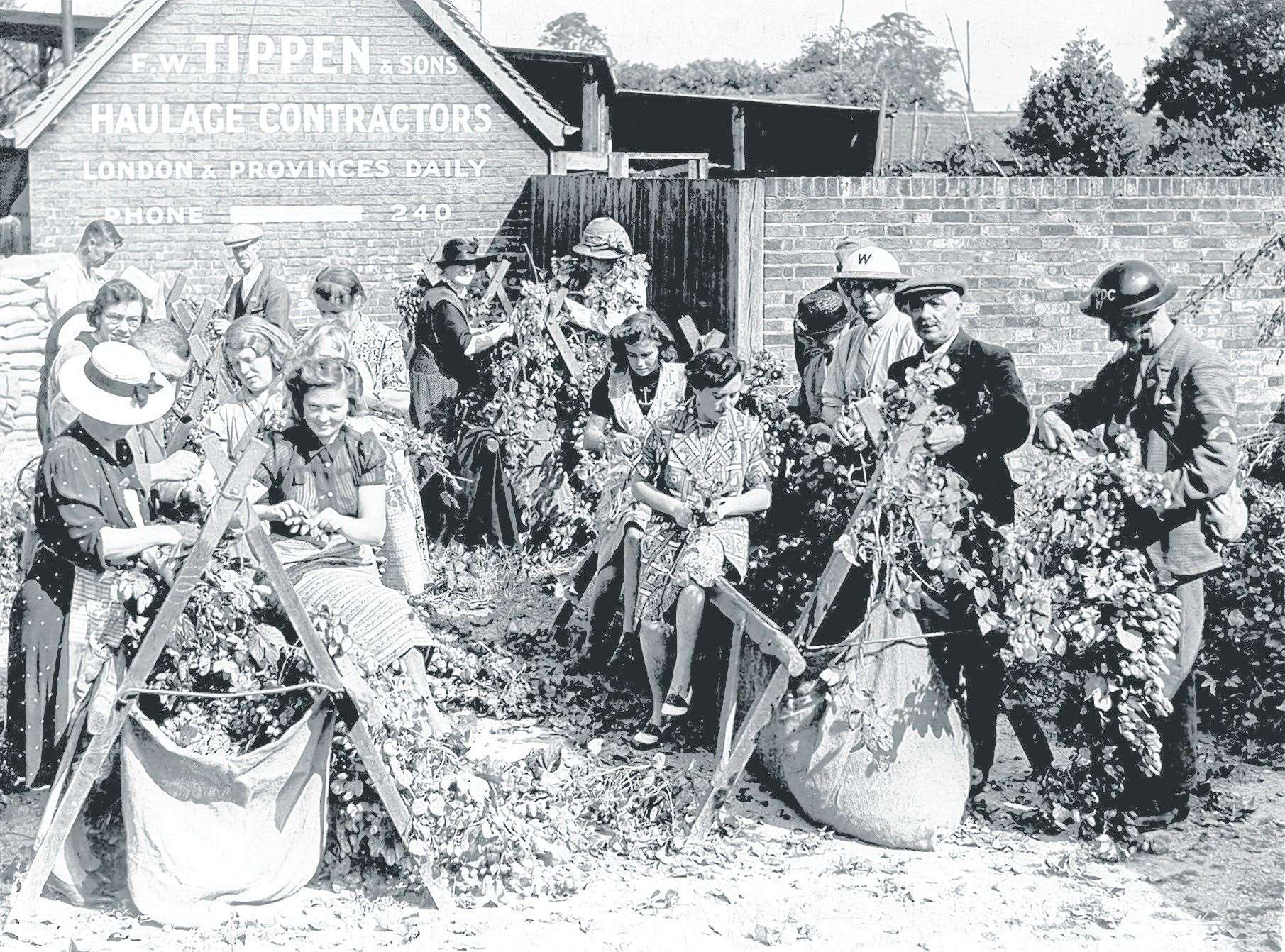 Hop-picking in the blitz of September 1940. These people are picking hops in the main street of the village of Marden. Stock picture
