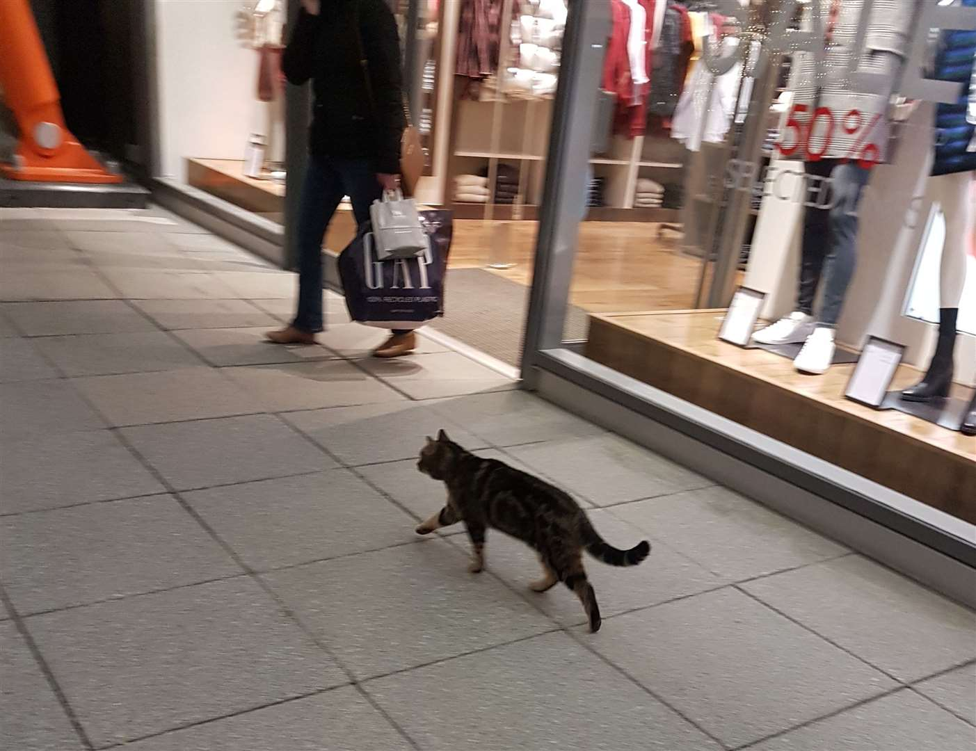 Tyson the Asda Cat strolls along the Designer Outlet's promenade. Picture: Jack Jarvis