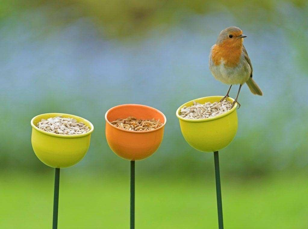 Will you spot a robin? Picture: RSPB/Chris Gomersall