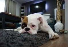 'Going again to work might trigger your pet anxiousness'