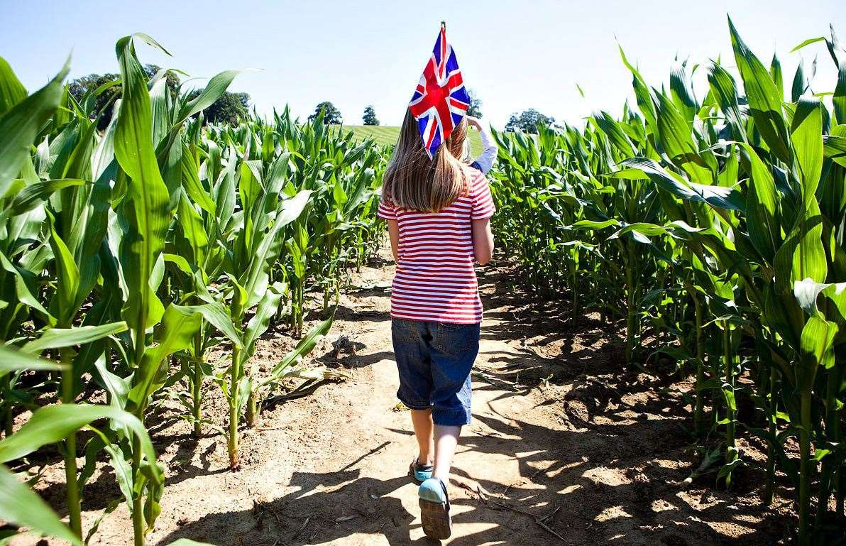 The Maize Maze has opened at Penshurst Place for the summer