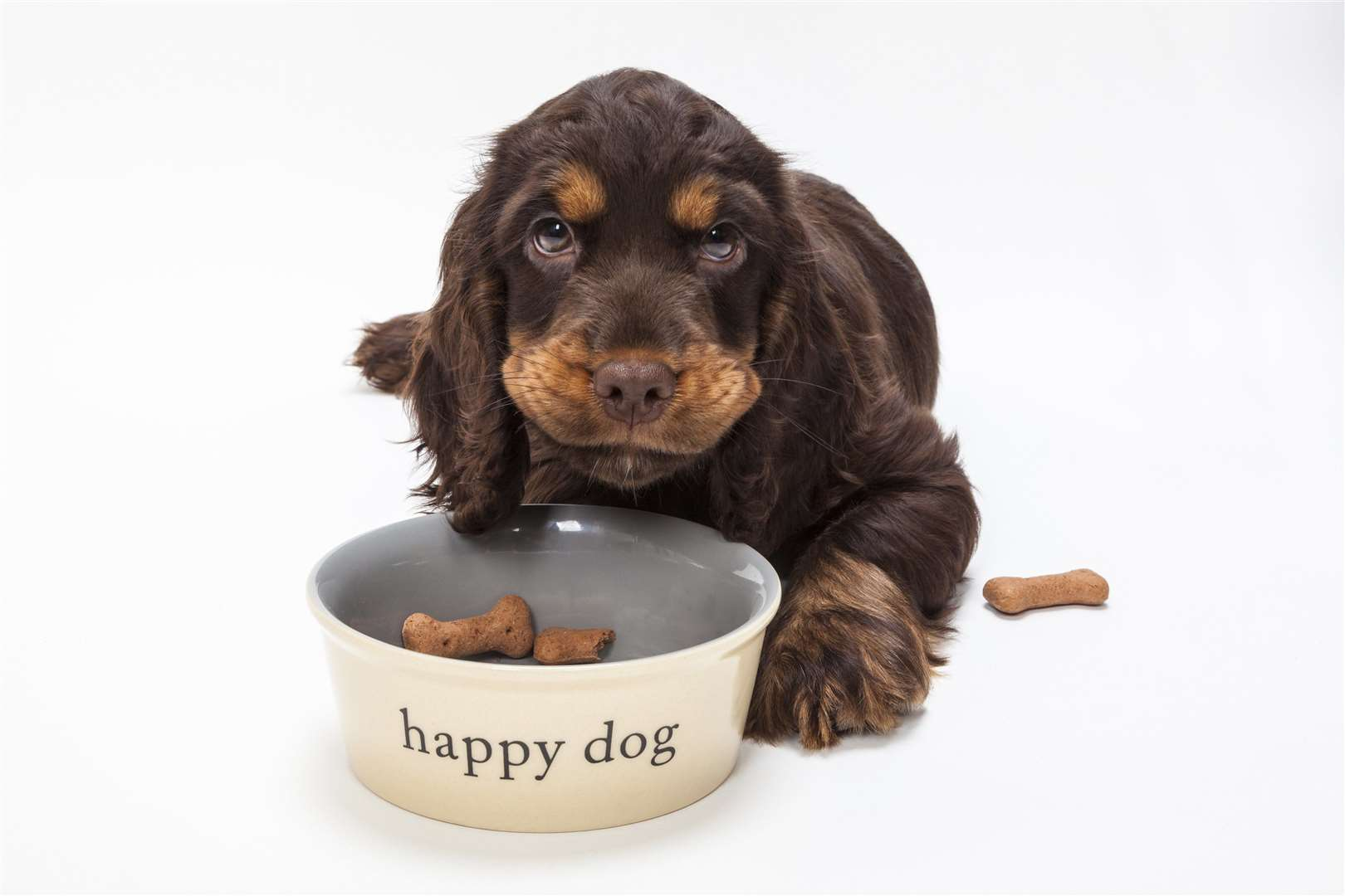 If a puppy carries excess weight, it can impact their bones as they grow