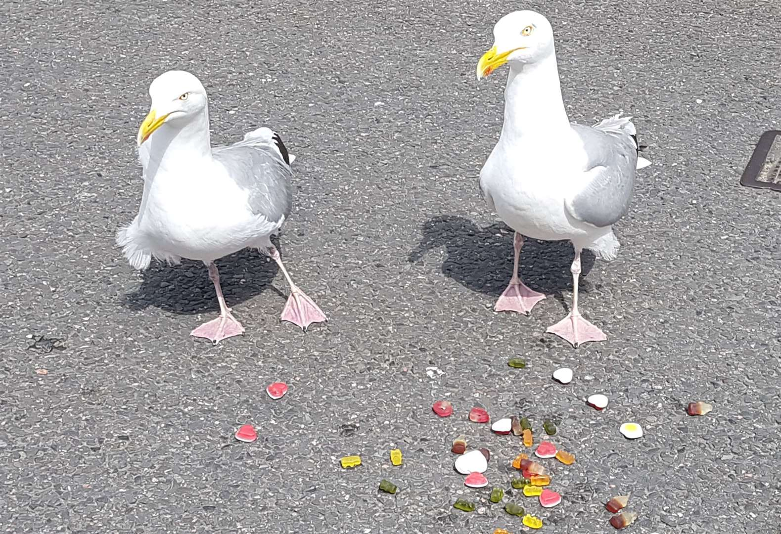 New research says staring at seagulls will make them less likely to steal your food. Picture: Kathryn Hewitt
